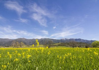 Upper Ojai Meadow Topas