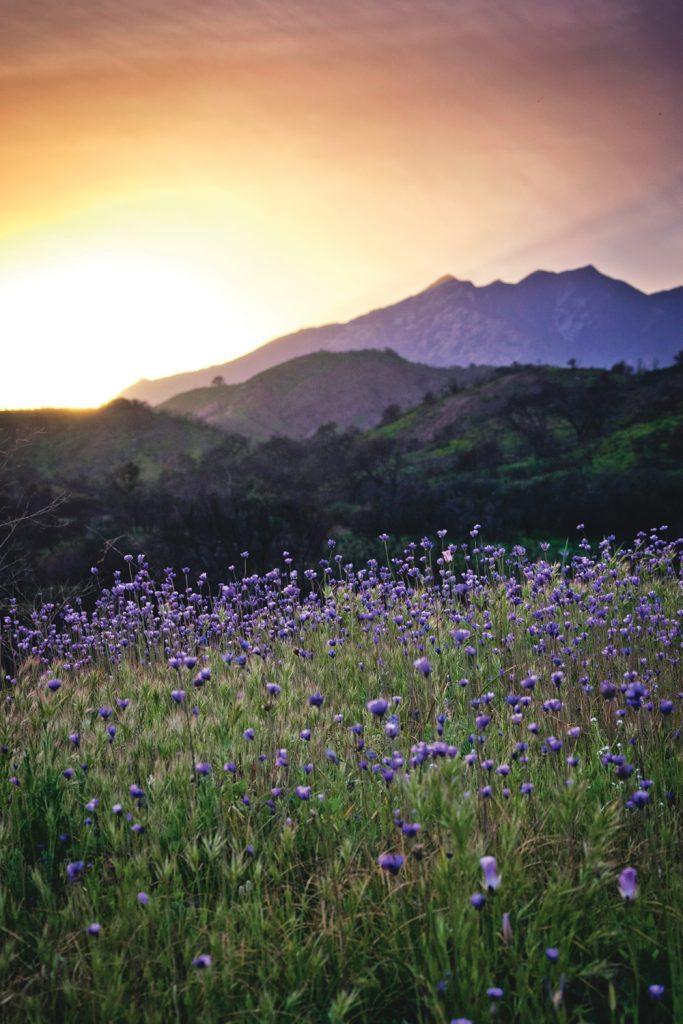 Ventura River Preserve2_sml