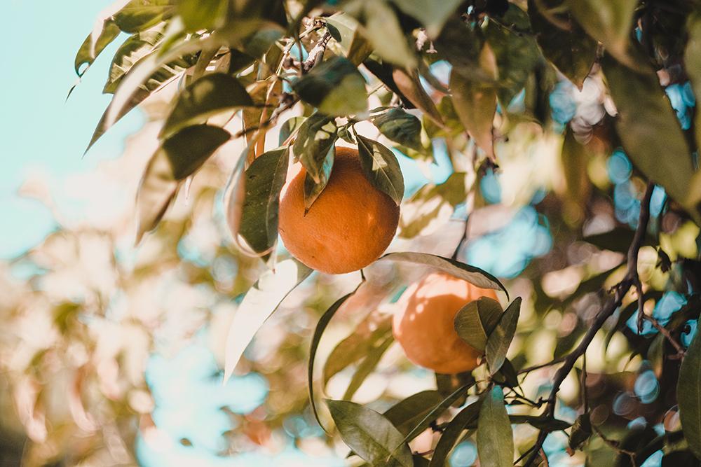 The sweet, sweet citrus