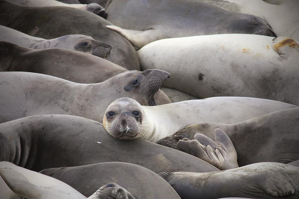 Signed, Seal-ed, Delivered