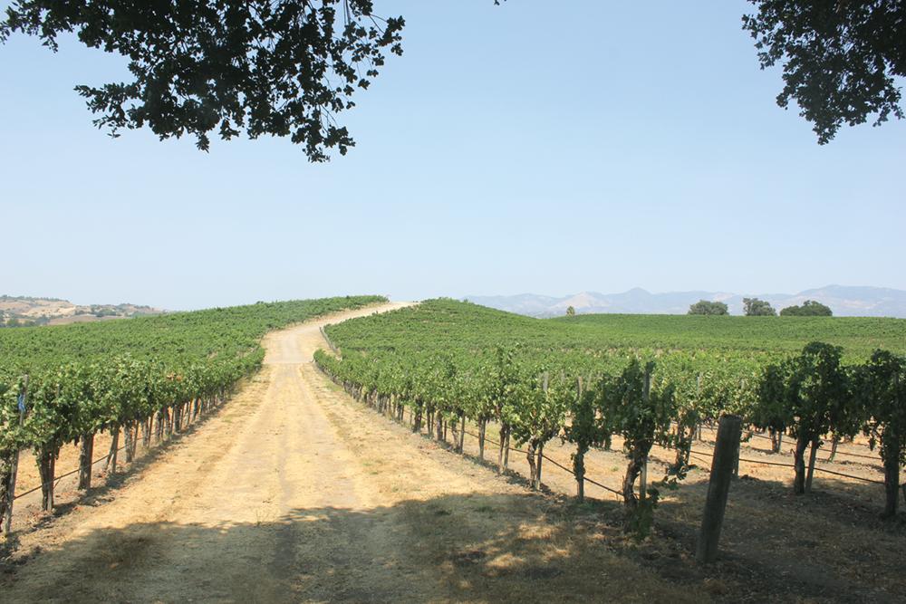 Taste Your Way Through the Santa Ynez Valley